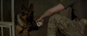 Меган Ливи / Megan Leavey (2017) BDRip 720p | iTunes 2